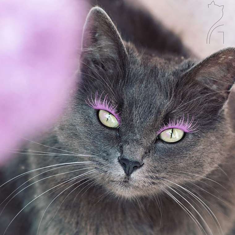 pitzush-puss-in-glam-6
