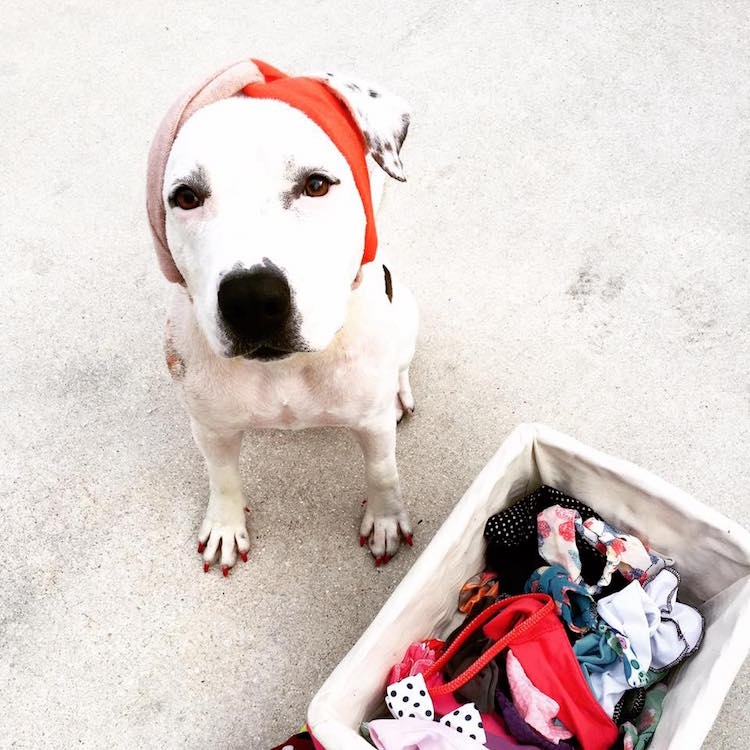 1-love-is-fur-ever-dog-rescue-bonnets-for-abigail