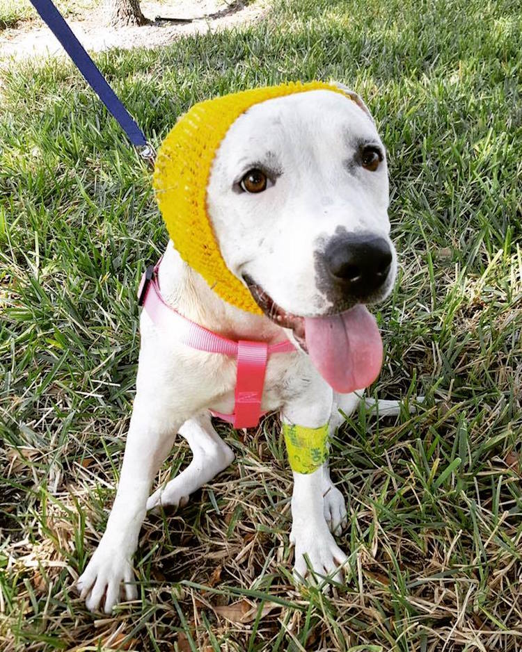 10-love-is-fur-ever-dog-rescue-bonnets-for-abigail