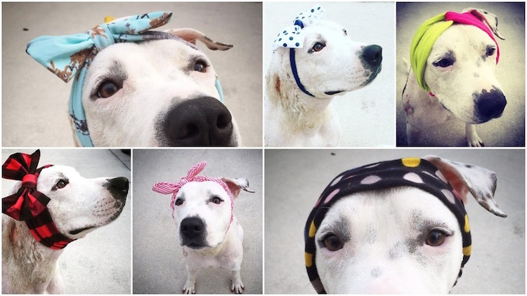 12-love-is-fur-ever-dog-rescue-bonnets-for-abigail