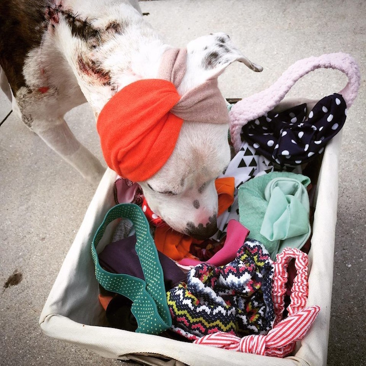 13-love-is-fur-ever-dog-rescue-bonnets-for-abigail