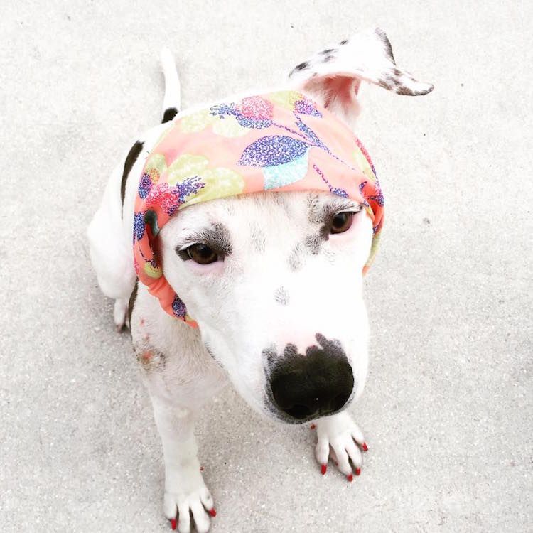 5-love-is-fur-ever-dog-rescue-bonnets-for-abigail