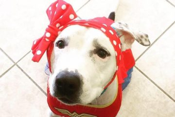 6-love-is-fur-ever-dog-rescue-bonnets-for-abigail
