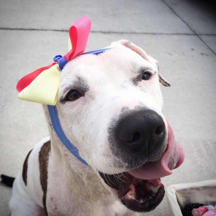 7-love-is-fur-ever-dog-rescue-bonnets-for-abigail