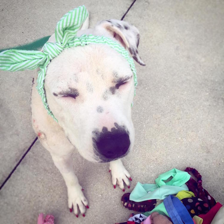 8-love-is-fur-ever-dog-rescue-bonnets-for-abigail