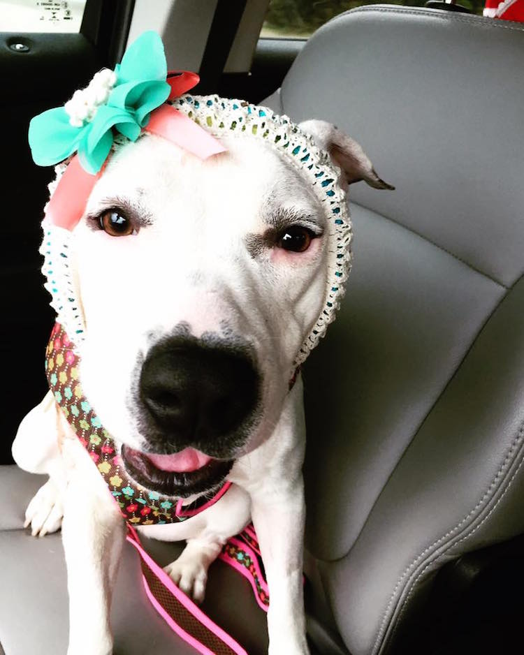 9-love-is-fur-ever-dog-rescue-bonnets-for-abigail