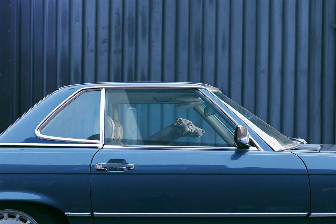 dogs-in-cars-martin-usborne-10