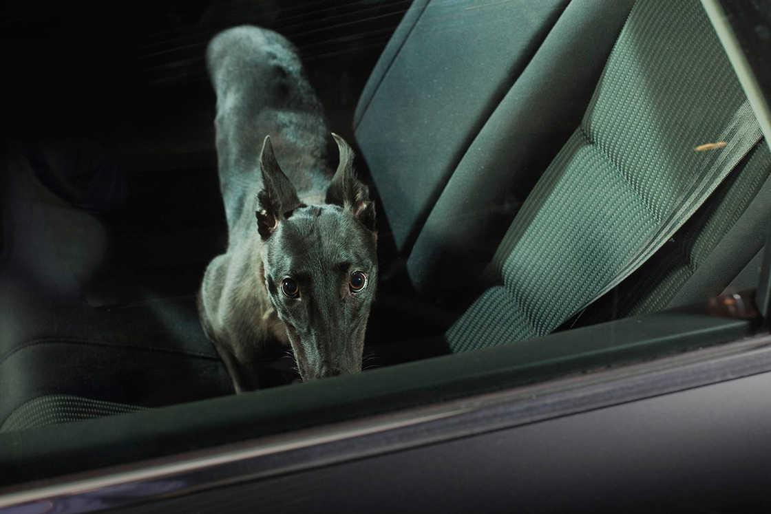 dogs-in-cars-martin-usborne-11