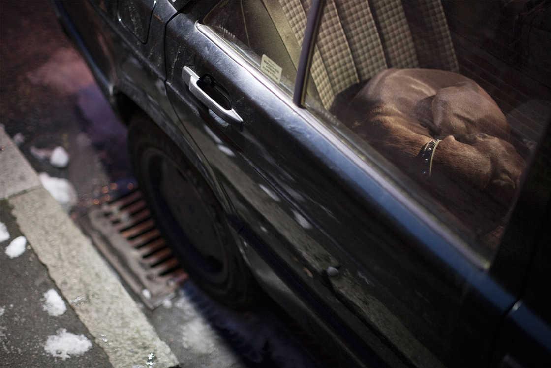 dogs-in-cars-martin-usborne-12