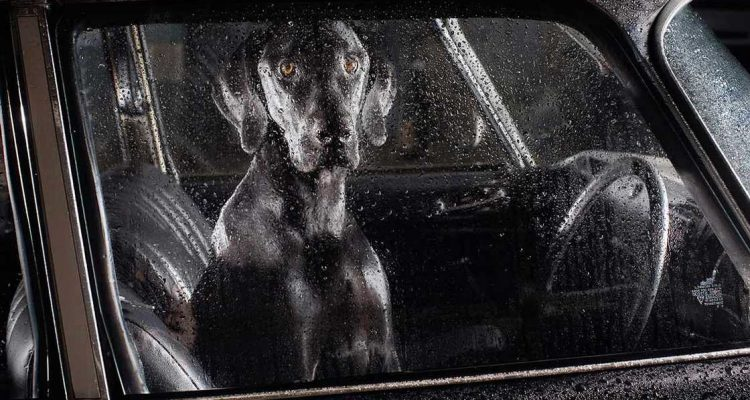 dogs-in-cars-martin-usborne-13
