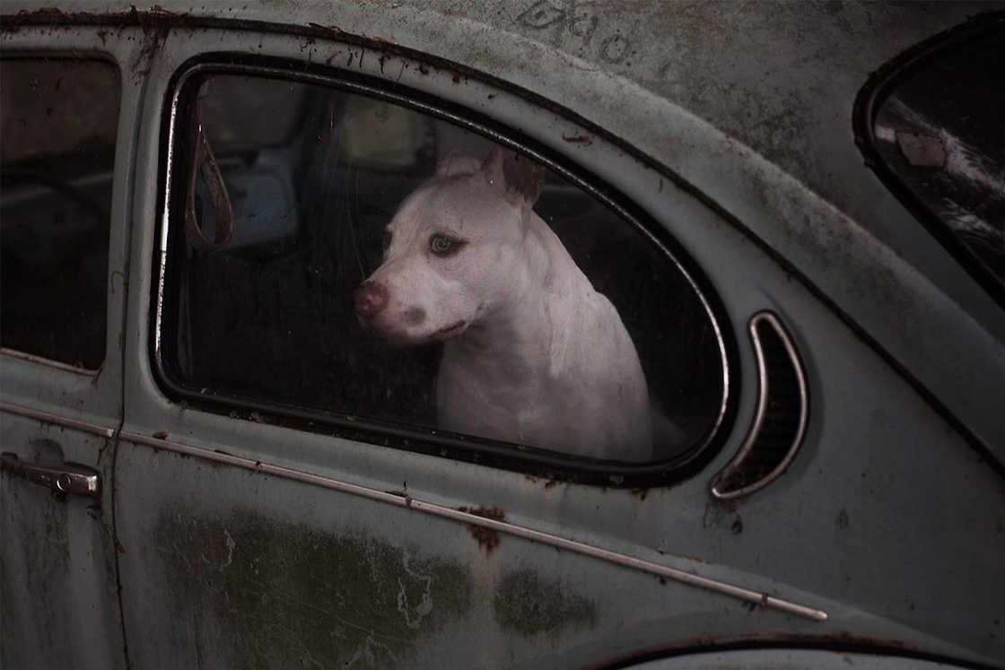 dogs-in-cars-martin-usborne-14