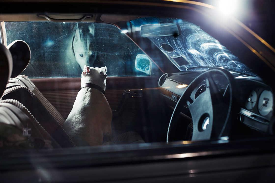 dogs-in-cars-martin-usborne-2