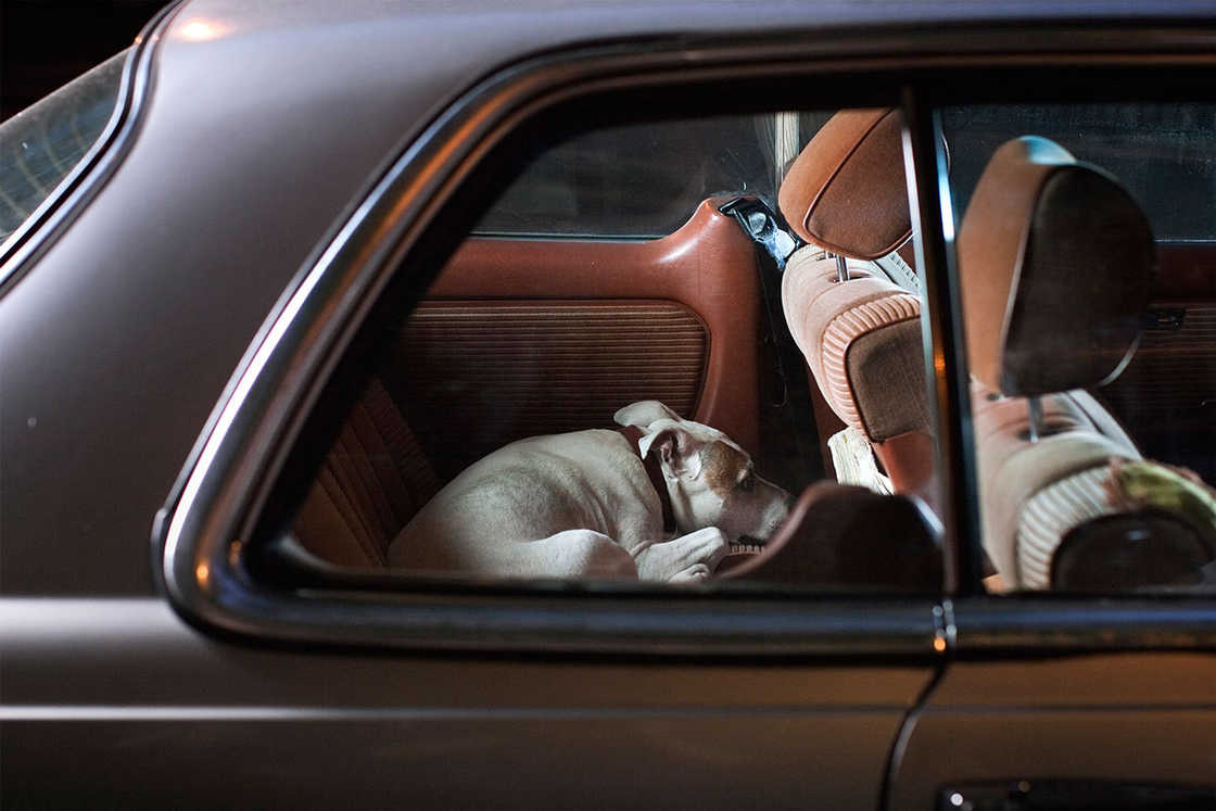 dogs-in-cars-martin-usborne-3