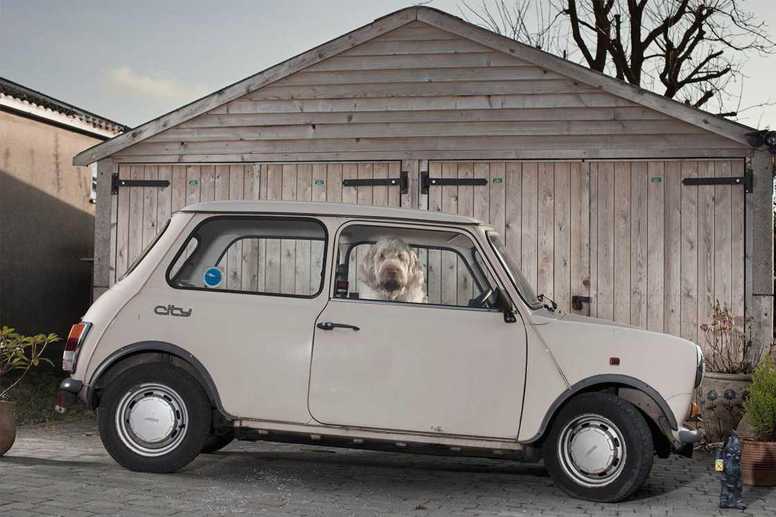 dogs-in-cars-martin-usborne-4