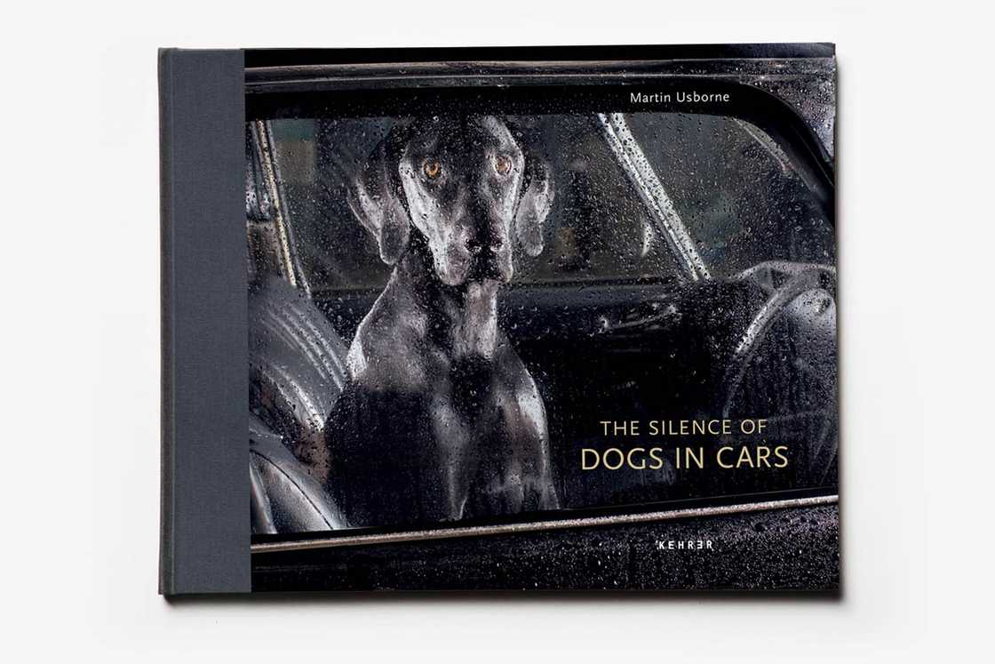 dogs-in-cars-martin-usborne-5