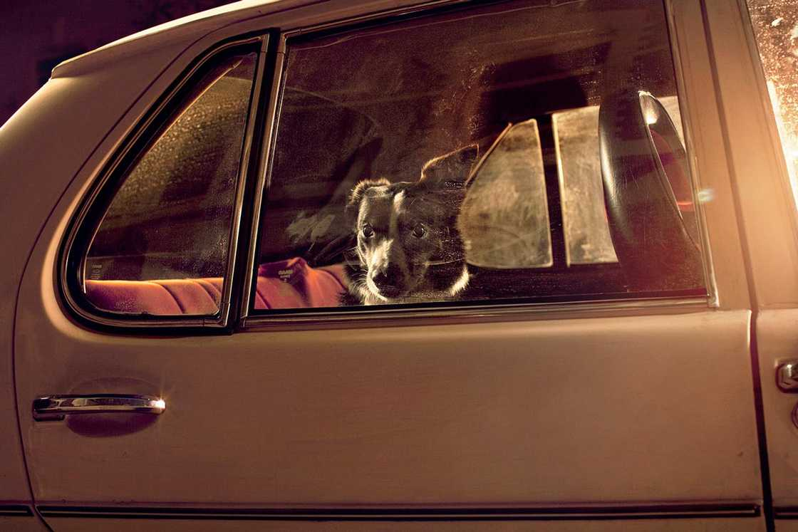 dogs-in-cars-martin-usborne-6