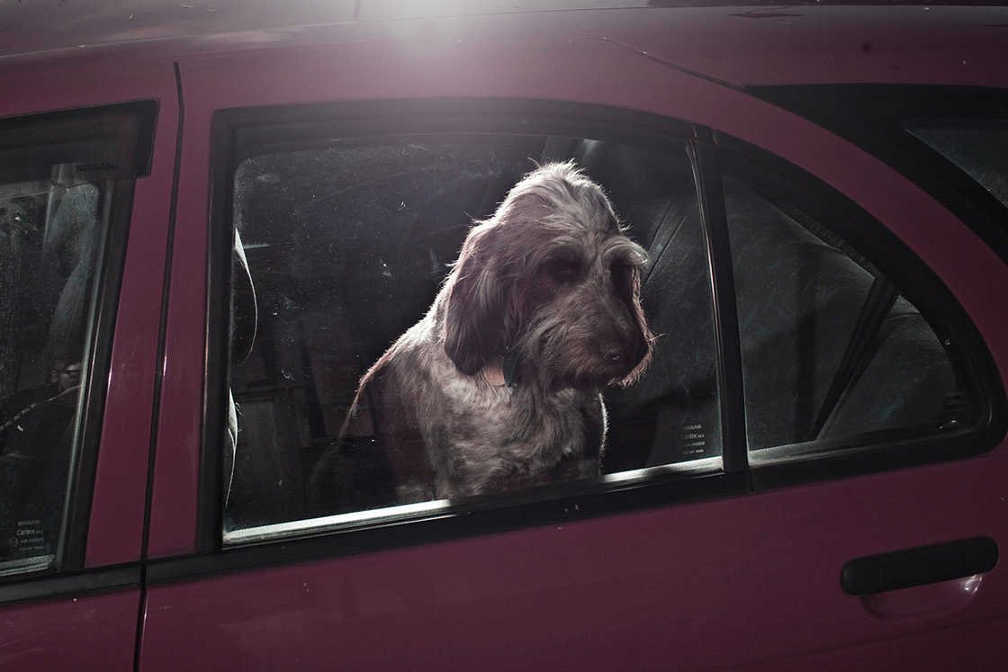dogs-in-cars-martin-usborne-8