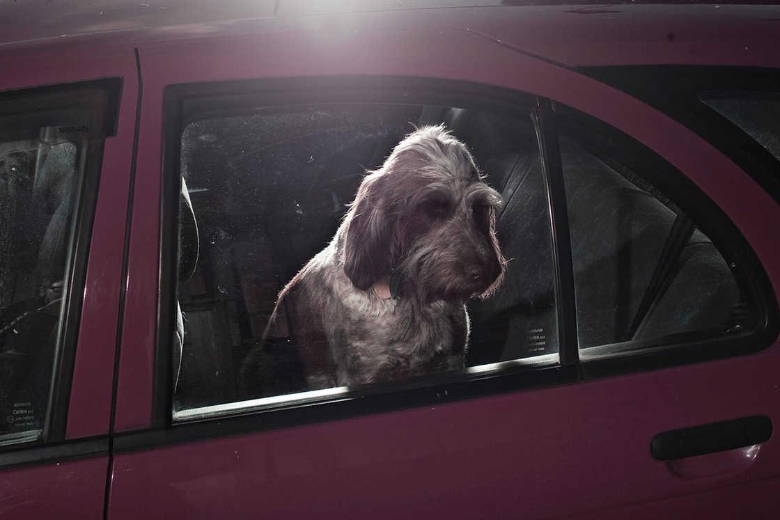 dogs-in-cars-martin-usborne-8