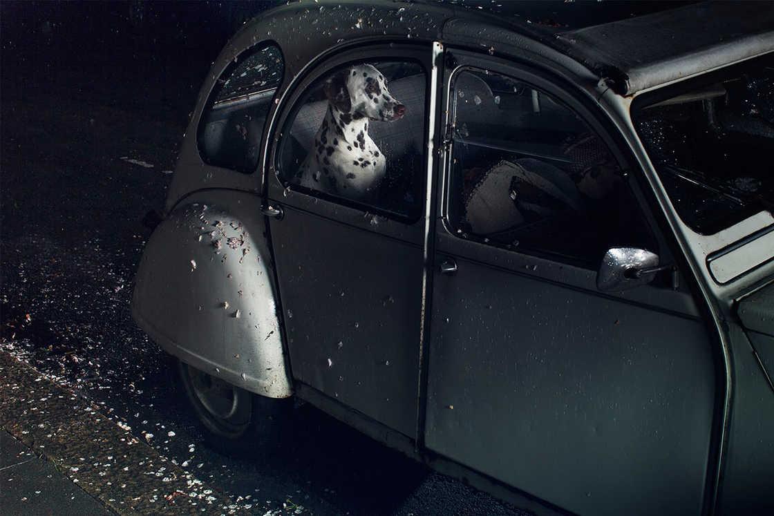 dogs-in-cars-martin-usborne-9