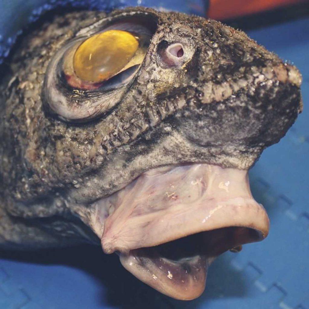 poissons-des-profondeurs-1
