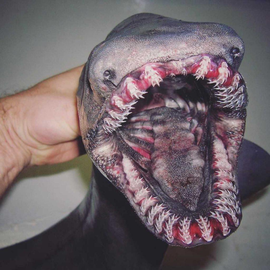 poissons-des-profondeurs-16