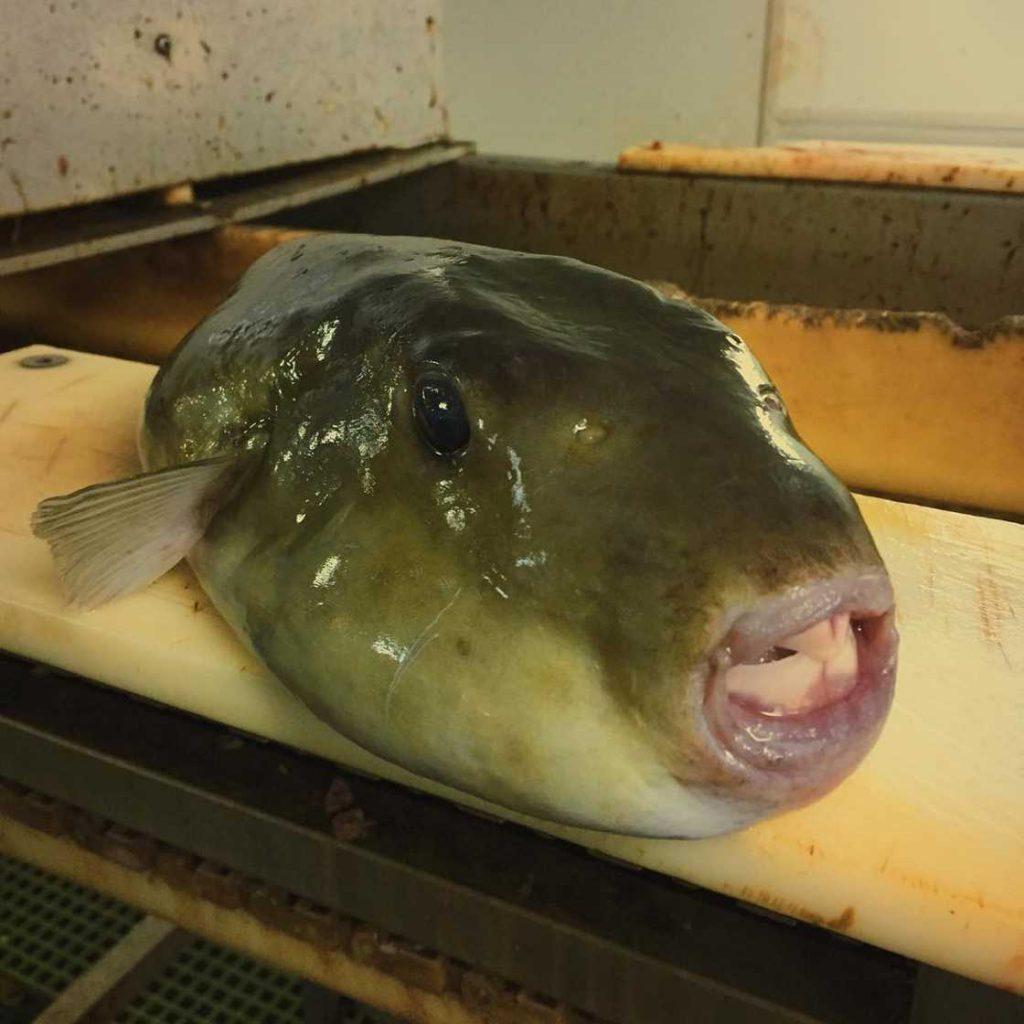 poissons-des-profondeurs-2
