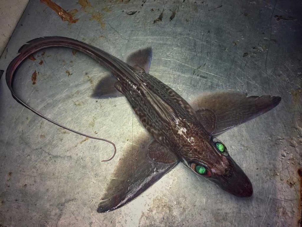 poissons-des-profondeurs-20