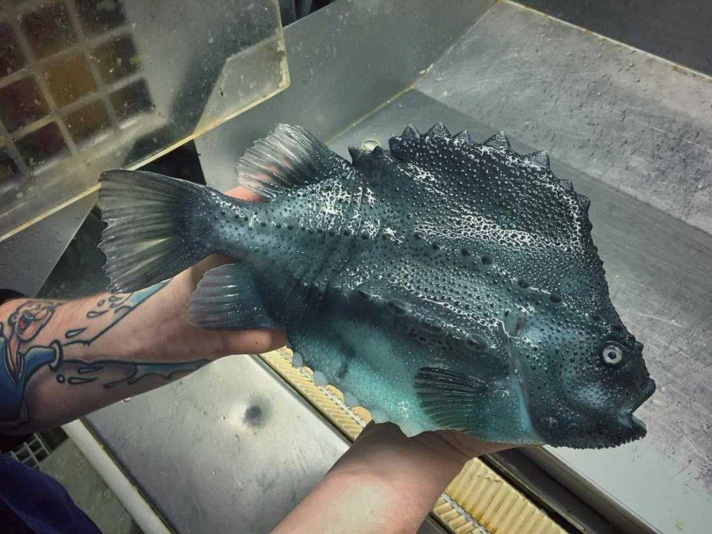 poissons-des-profondeurs-21