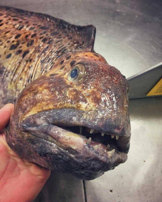 poissons-des-profondeurs-22