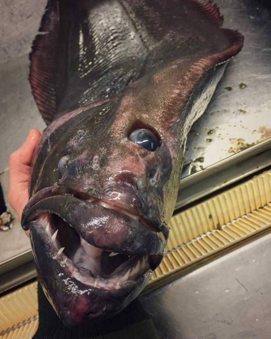 poissons-des-profondeurs-23