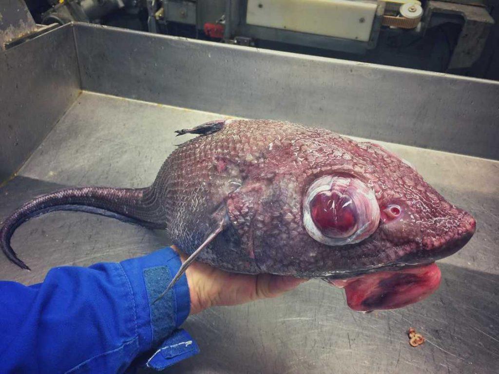 poissons-des-profondeurs-24