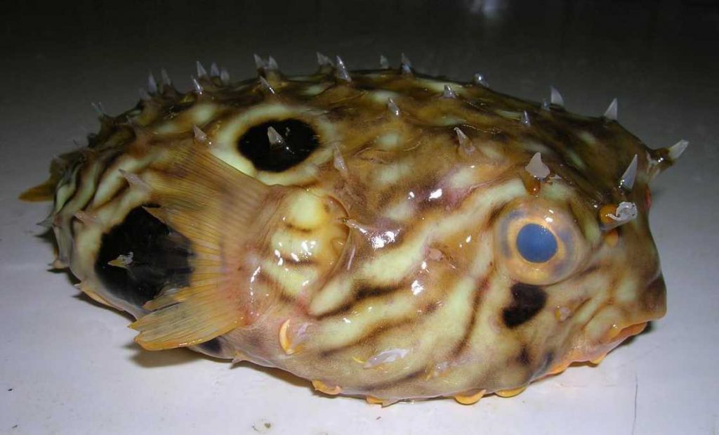 poissons-des-profondeurs-26