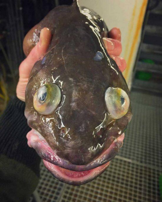 poissons-des-profondeurs-27
