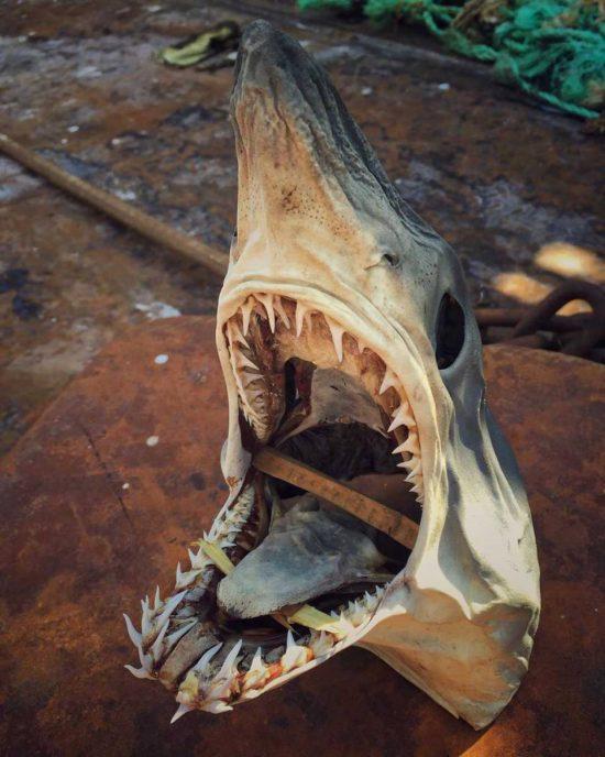 poissons-des-profondeurs-3