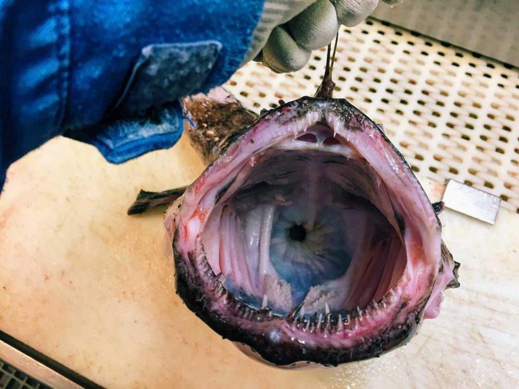 poissons-des-profondeurs-6