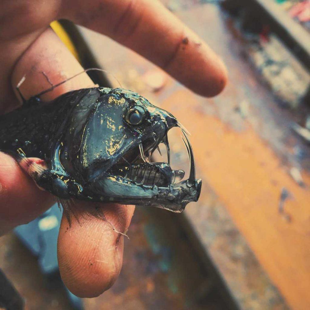 poissons-des-profondeurs-7