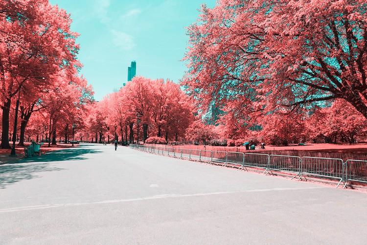 paolo-pettigiani-infrared-new-york-7
