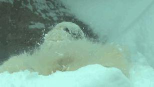 oregon-zoo-closed-ski-animals-snow-1