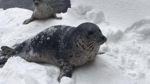 oregon-zoo-closed-ski-animals-snow-2