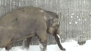 oregon-zoo-closed-ski-animals-snow-4