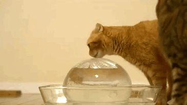 funny-dramatic-cats-35-58f8781beb65d__605